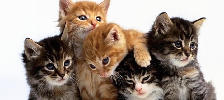 camada de gatos
