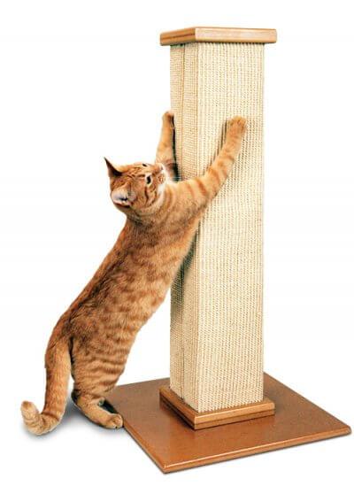 gato y su rascador
