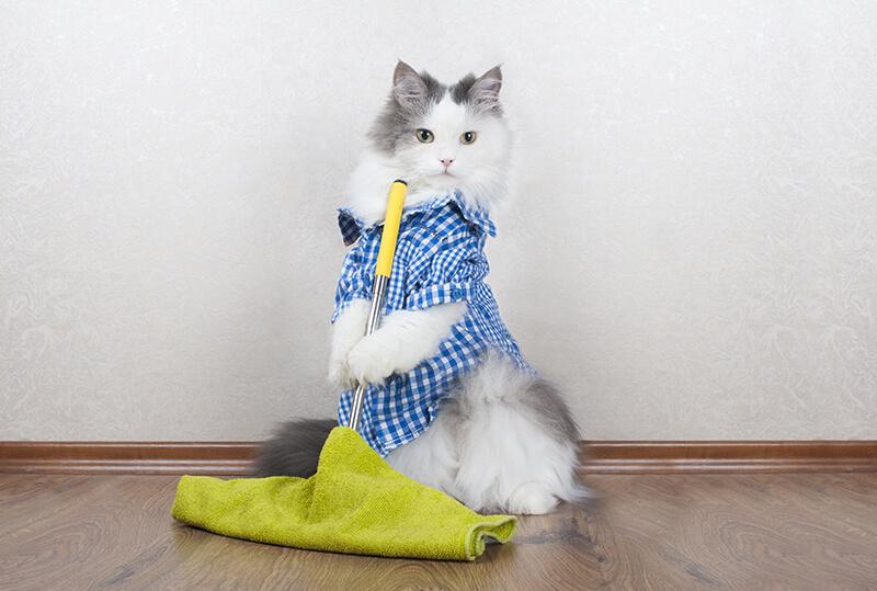 Gato limpiando