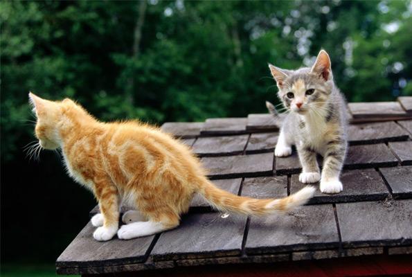 Porque vienen gatos a mi casa