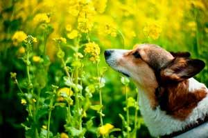 olfateando plantas