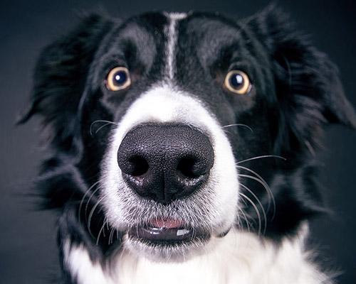 Perro ansioso