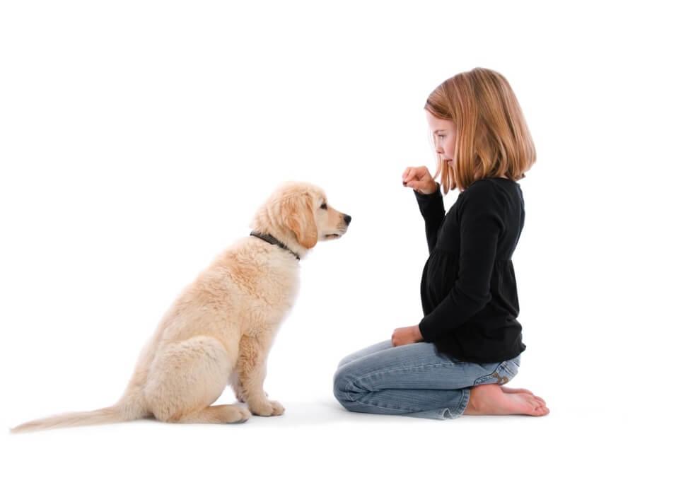 OBediencia en cachorrros