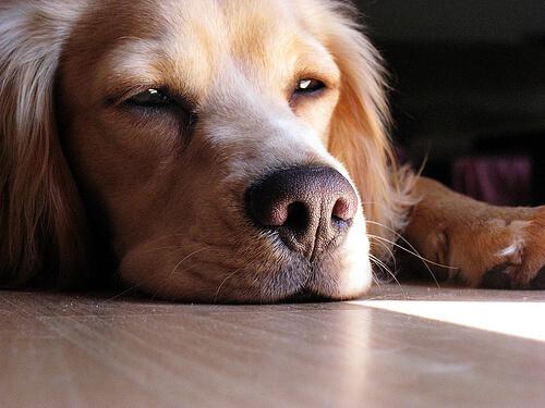 perro ansiedad