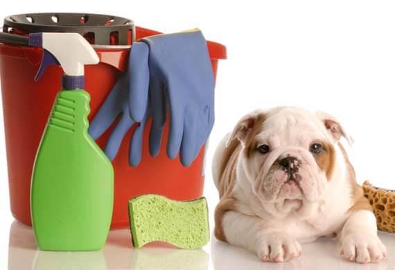 perro limpiadores