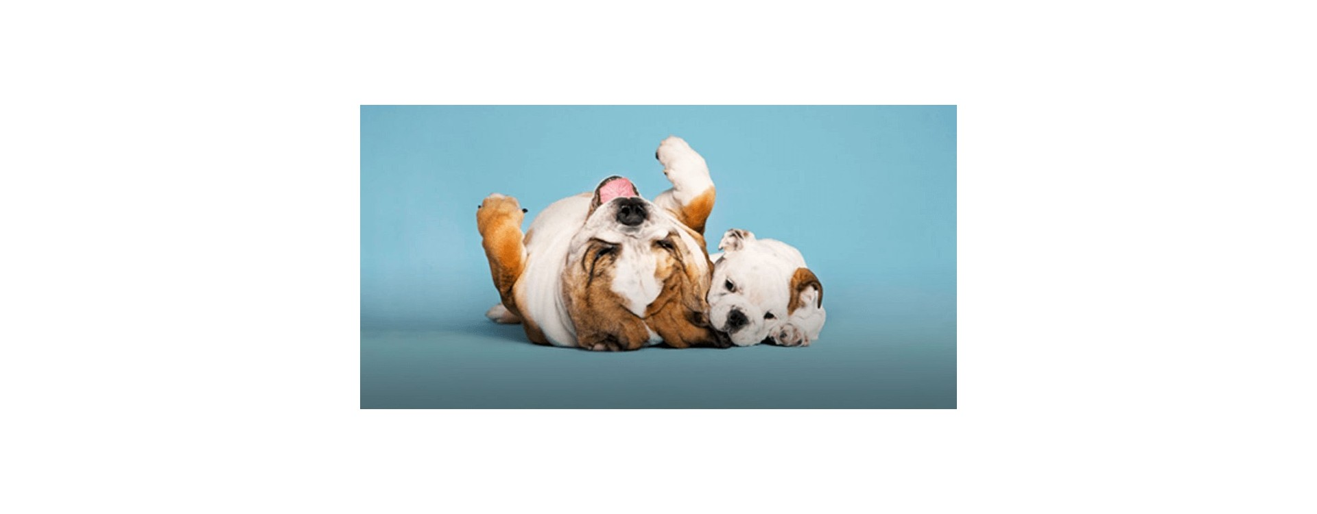 eliminar olor orina perro sofa